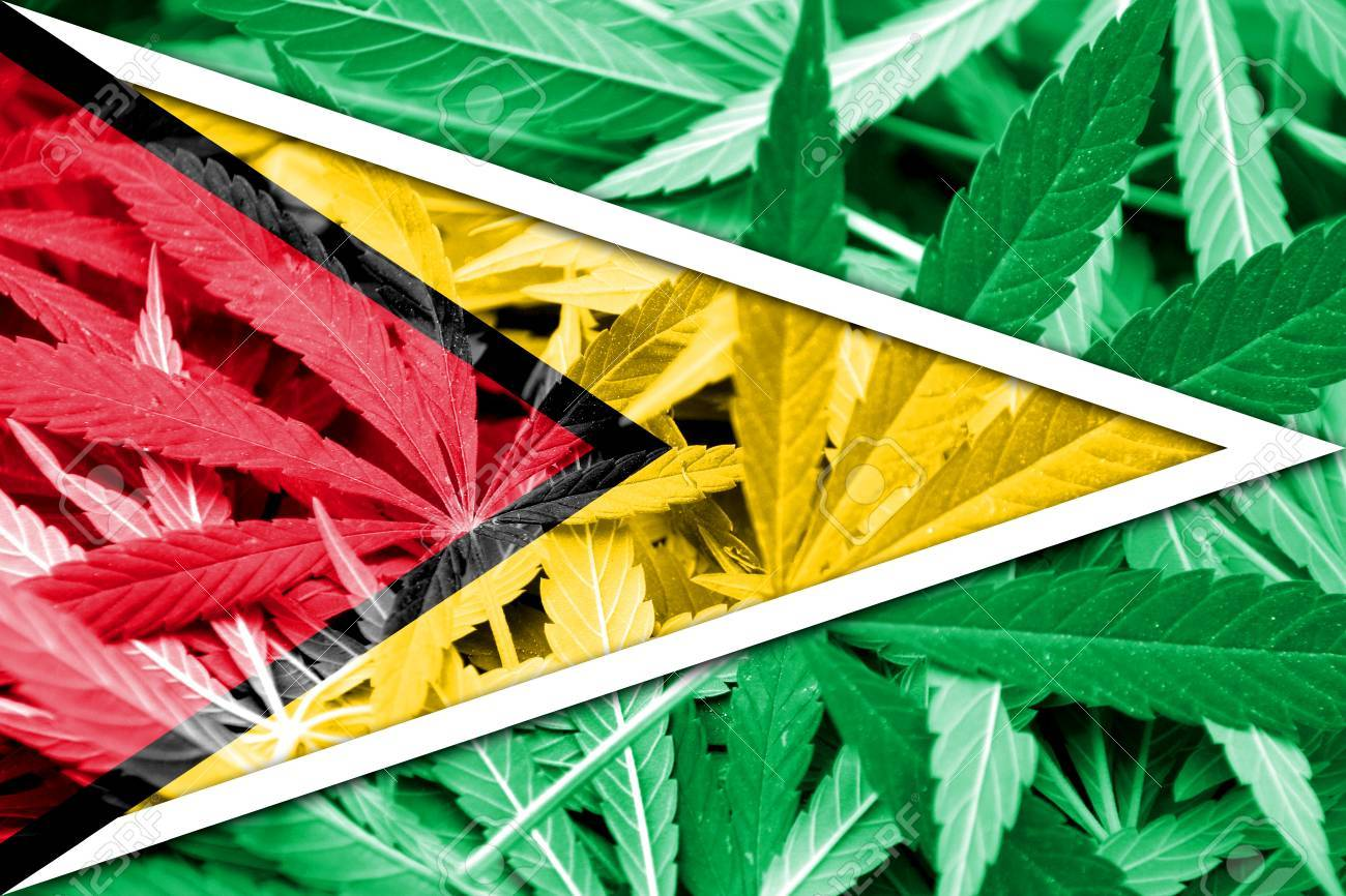 Image result for Guyana cannabis