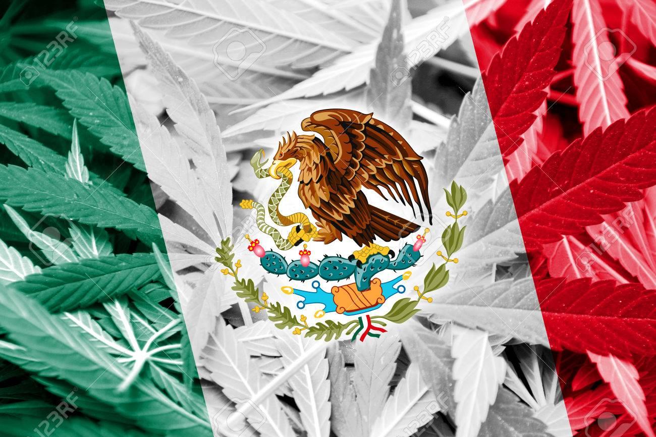 Bandera De México En El Fondo De Cannabis. La Política De Drogas. La  Legalización De La Marihuana Fotos, Retratos, Imágenes Y Fotografía De  Archivo Libres De Derecho. Image 37848747.