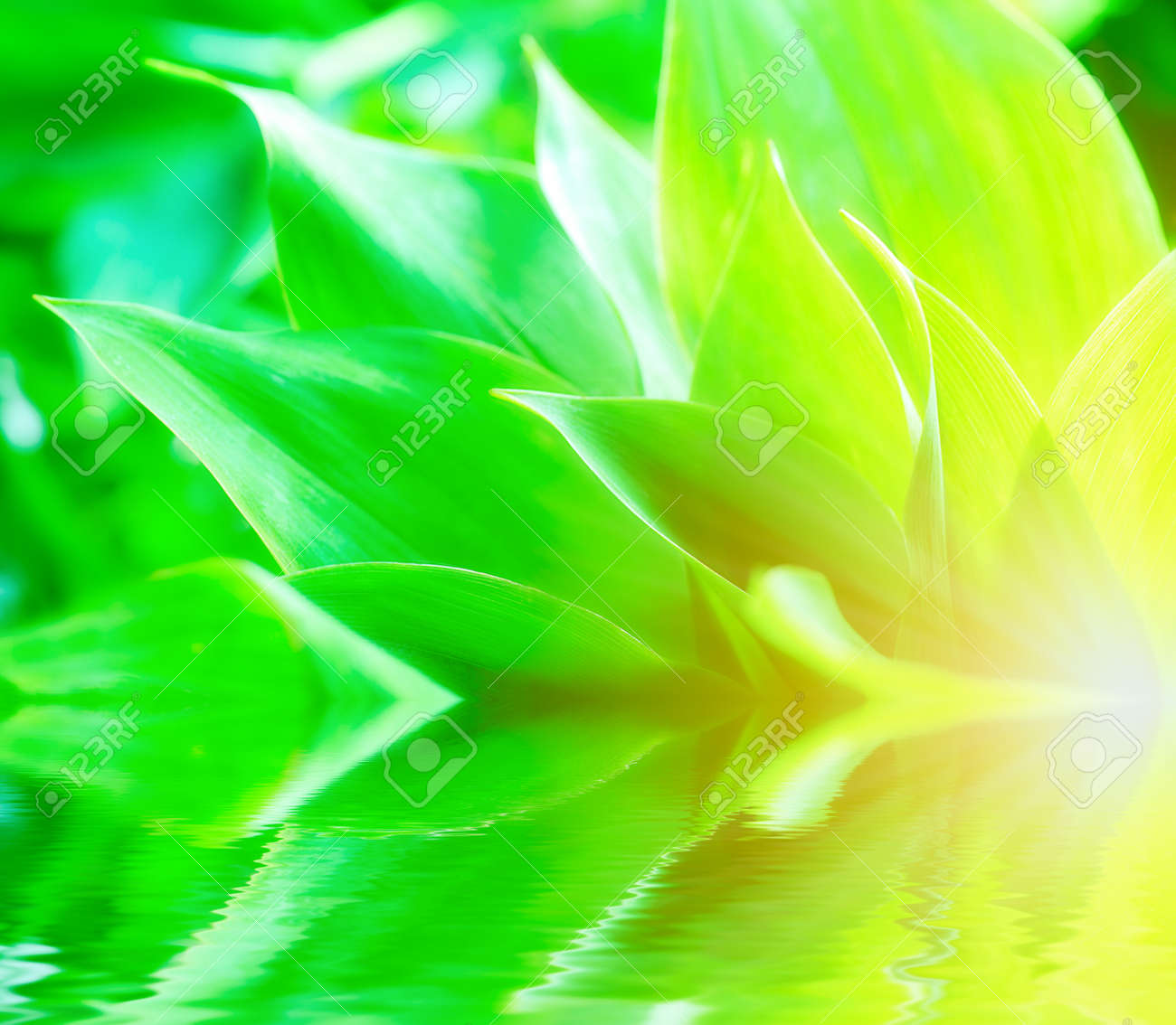 Fresh green leaves, lily of the valley. Stock Photo - 7803161
