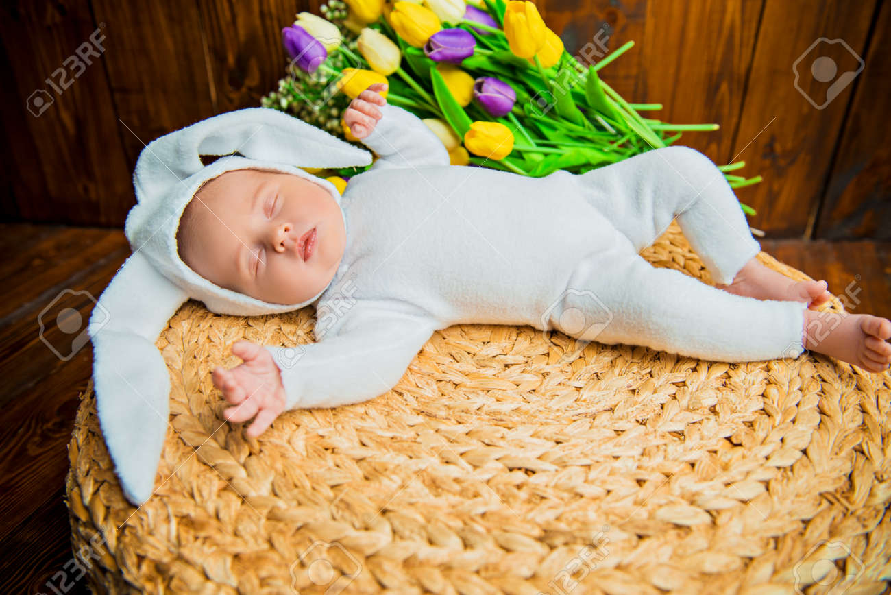 100 Gambar Babi Kostum HD