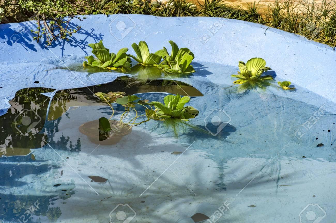 Plantas Flotantes En El Agua Y Un Estanque Artificial Fotos
