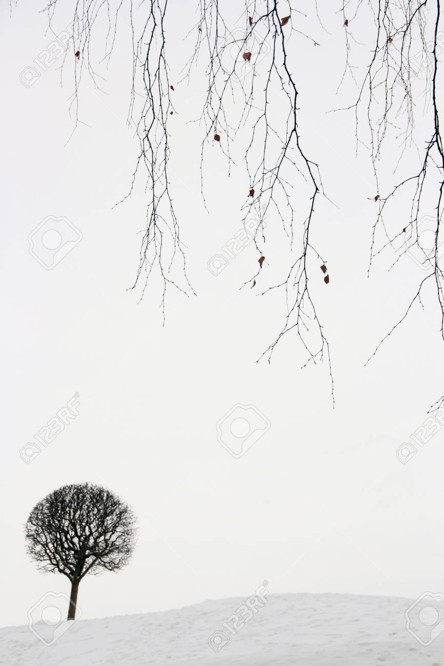 Winter landscape, lonely small tree in snow. - 50775236