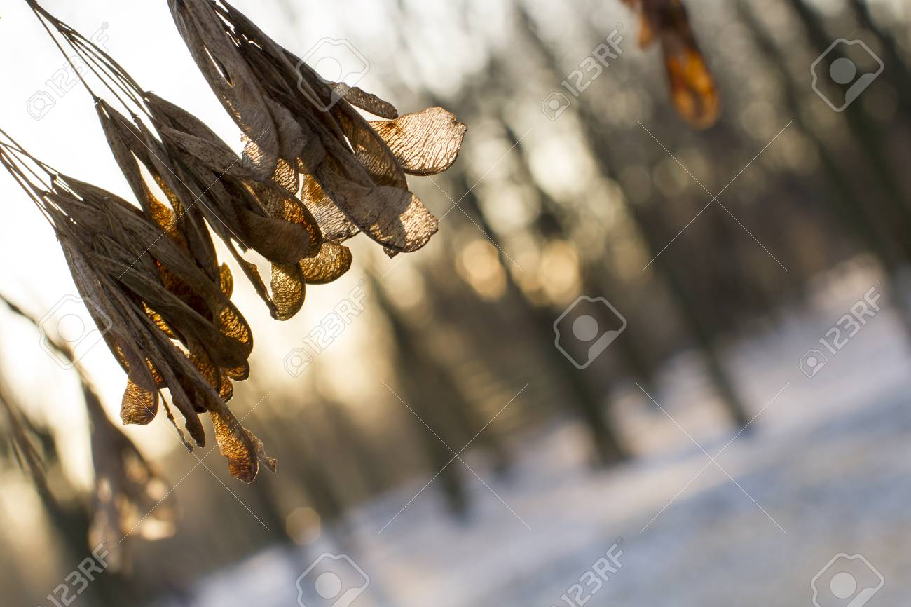 Sprig against the backdrop of the winter forest. Winter landscape. - 51187019