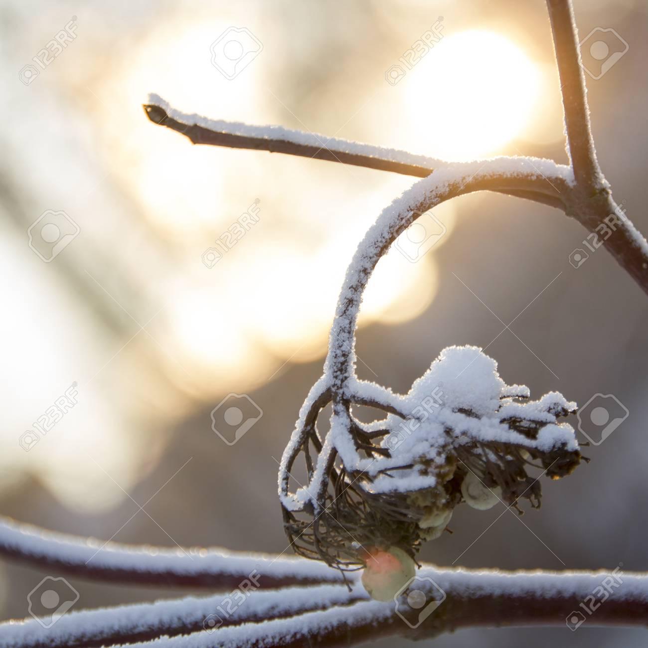 Sunset in winter forest. Winter landscape. - 51187025