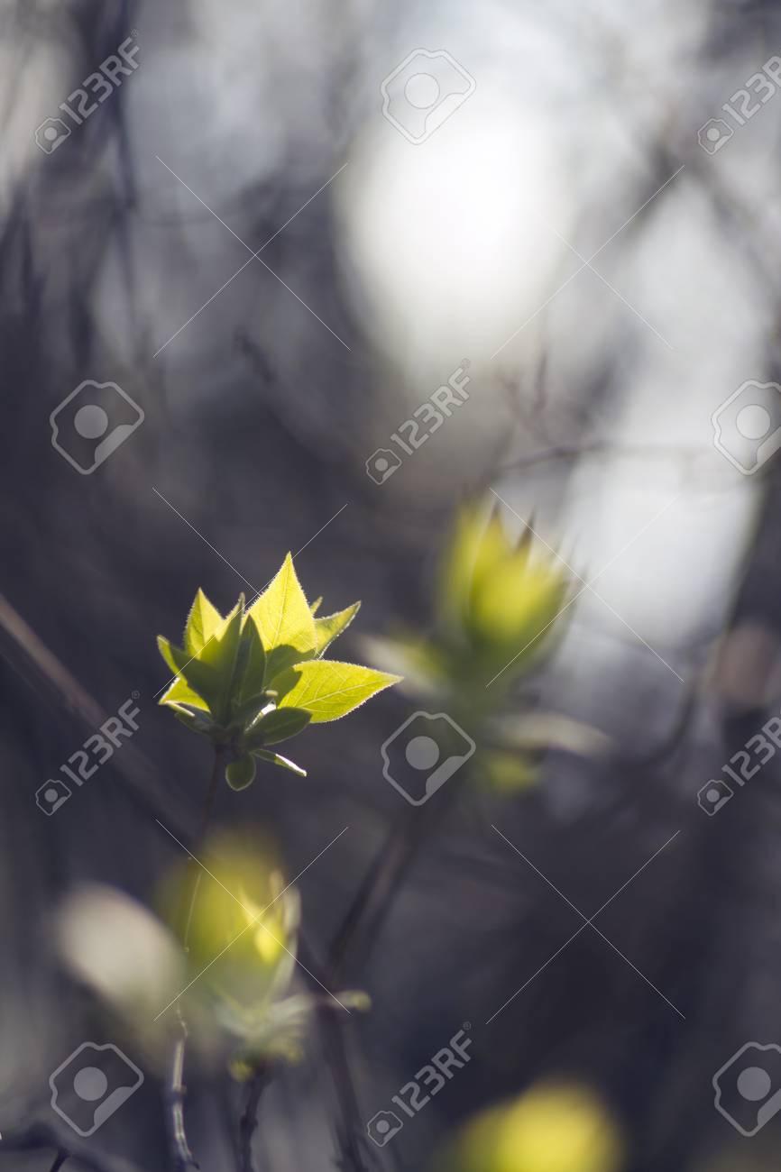 Spring mood. Sunny nature. Nature leaf & sun. Nature view. Beautiful nature. Nature life. Green nature. - 59049149