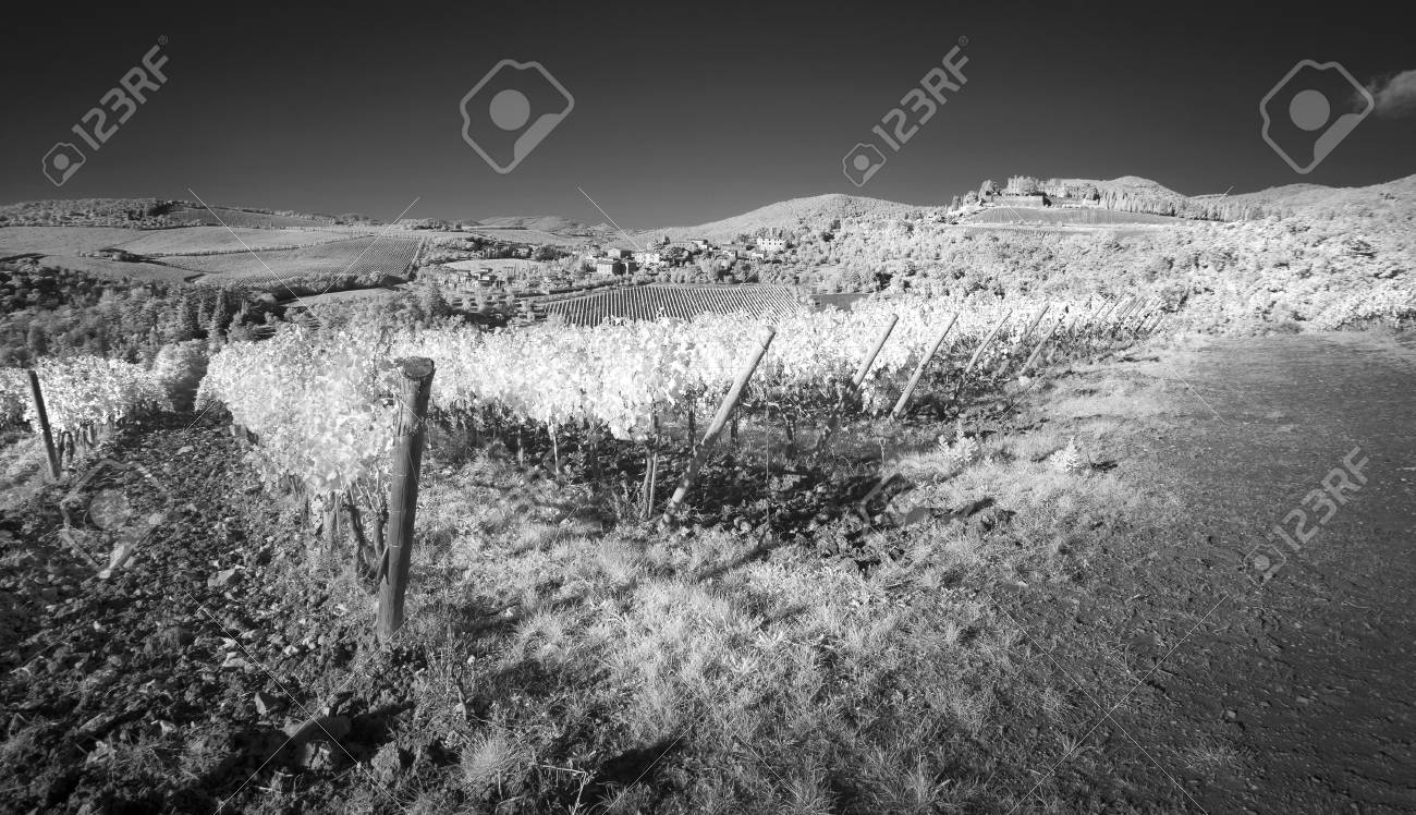 Black and white vineyards of italy stock photo 77579880
