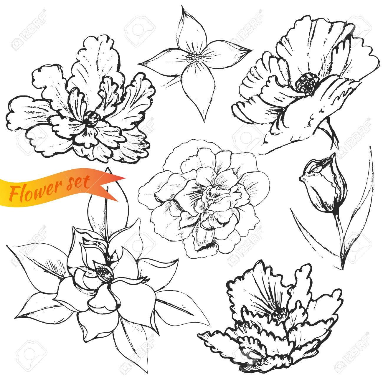 ユリ の 花 英語