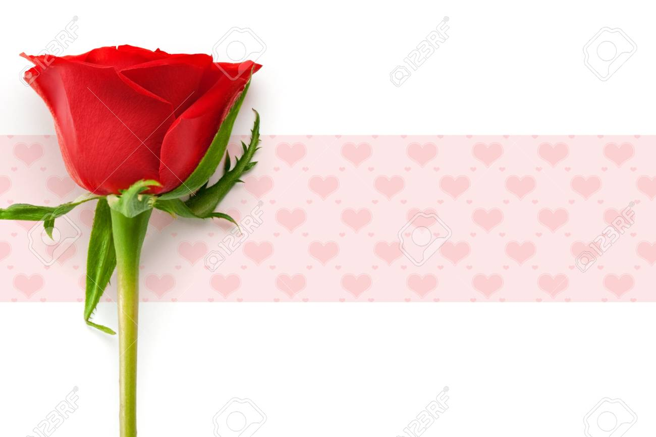 valentine's day concept with red rose Stock Photo - 4080215