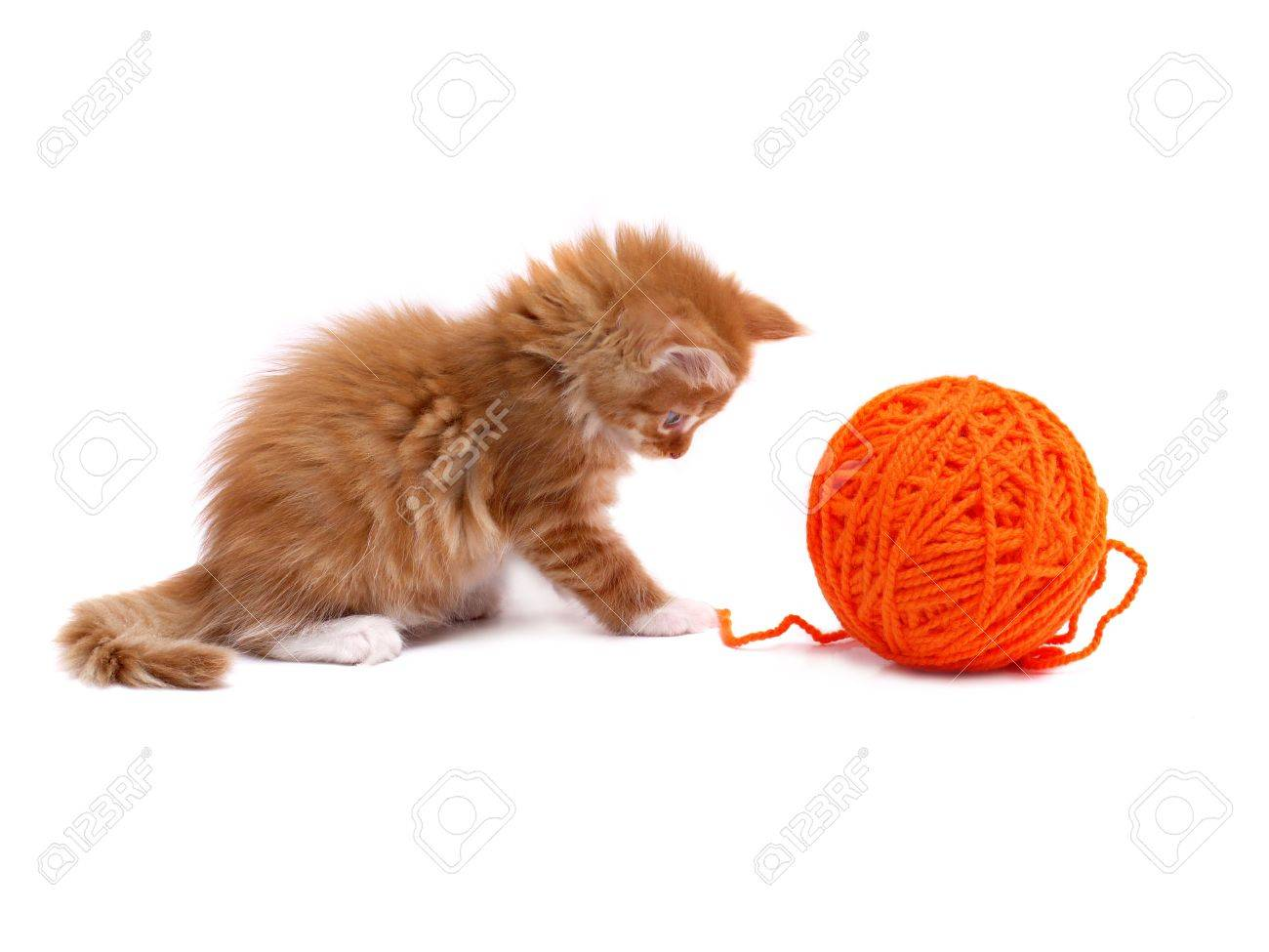 Kitten playing with orange ball of wool shot over white background Stock Photo - 4894342
