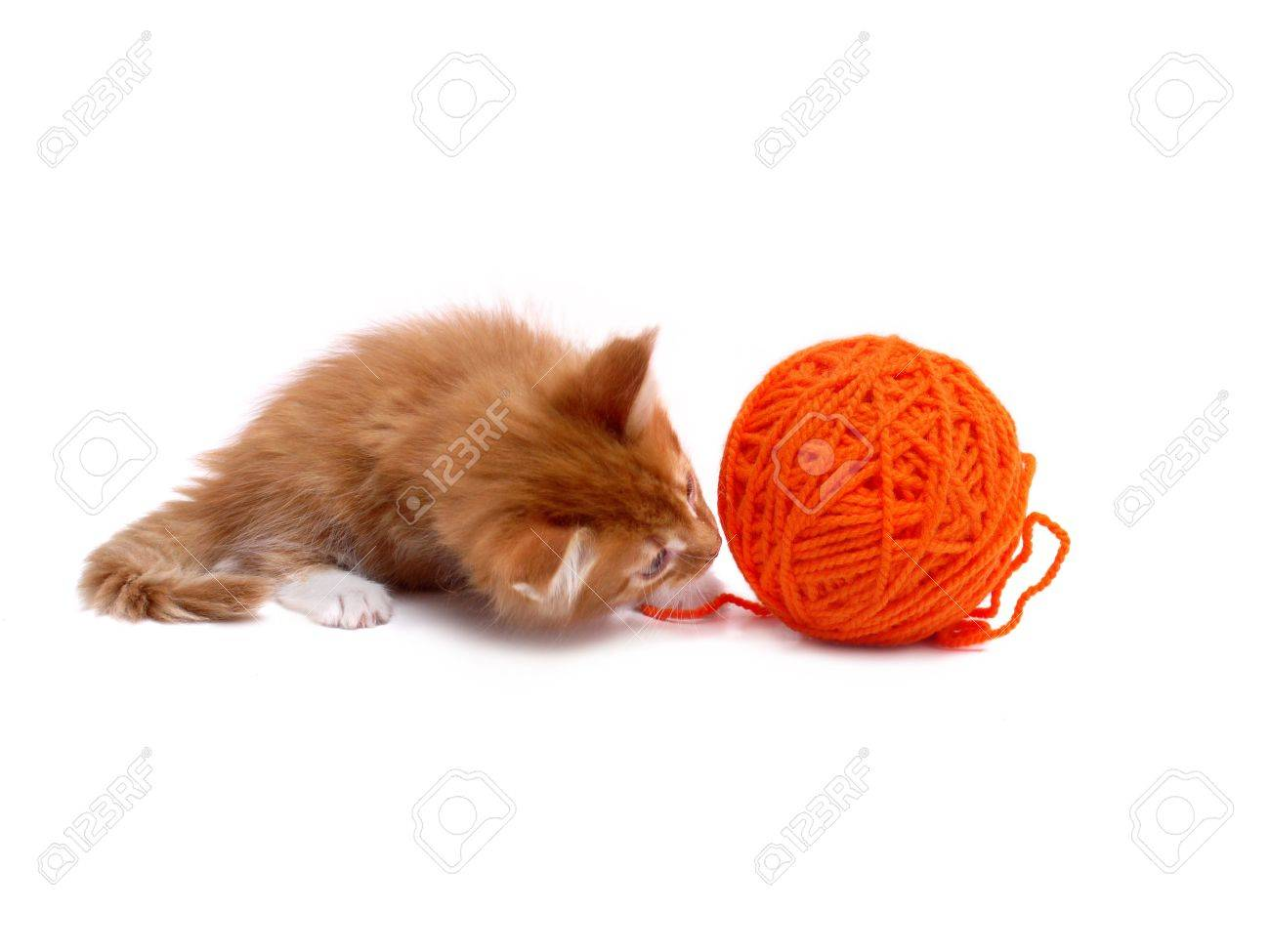 Kitten playing with orange ball of wool shot over white background Stock Photo - 4897603