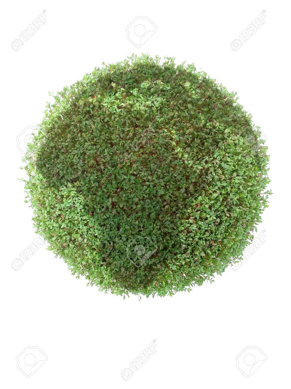 Fabelhaft Grüne Pflanzen Ideen Von Grüne über Weißem Hintergrund Standard-bild - 28631612