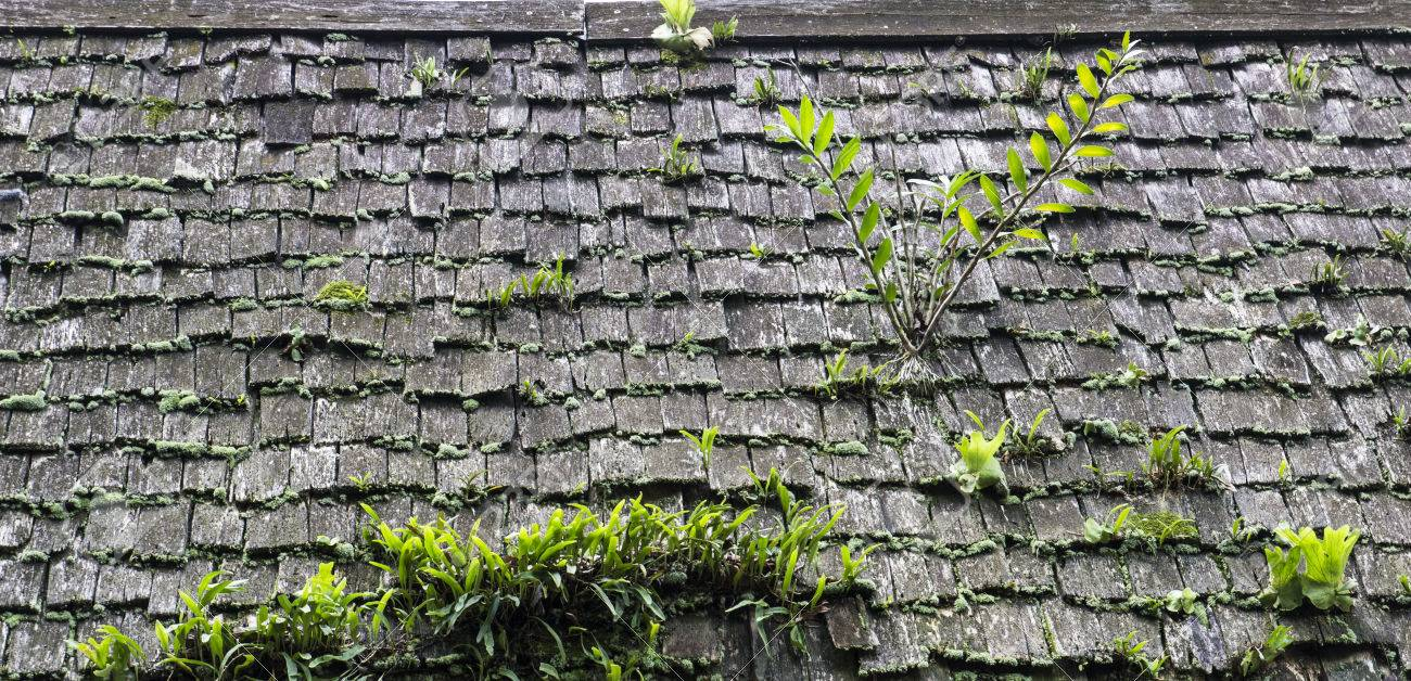 Fern And Bracken Growing On Old Roof Covered With Moss Stock Photo    30106126