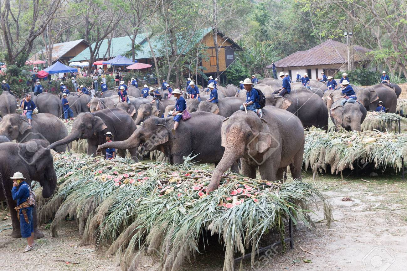 March 13: the day of the elephant in Thailand, the day of Pluto in the USA (Illinois). Holidays March 13 24