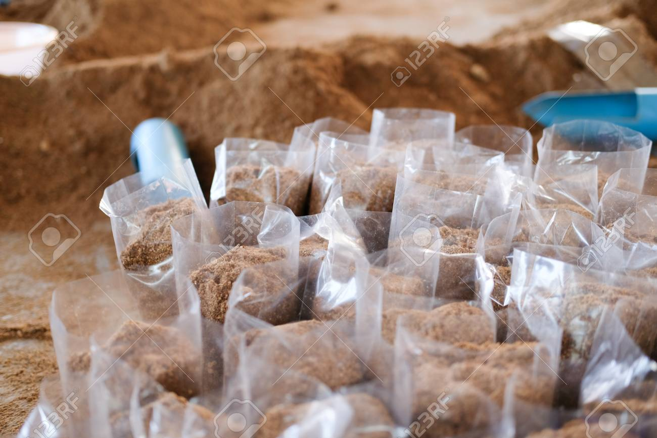 artificial substrate in bag for growing edible mushroom in farm