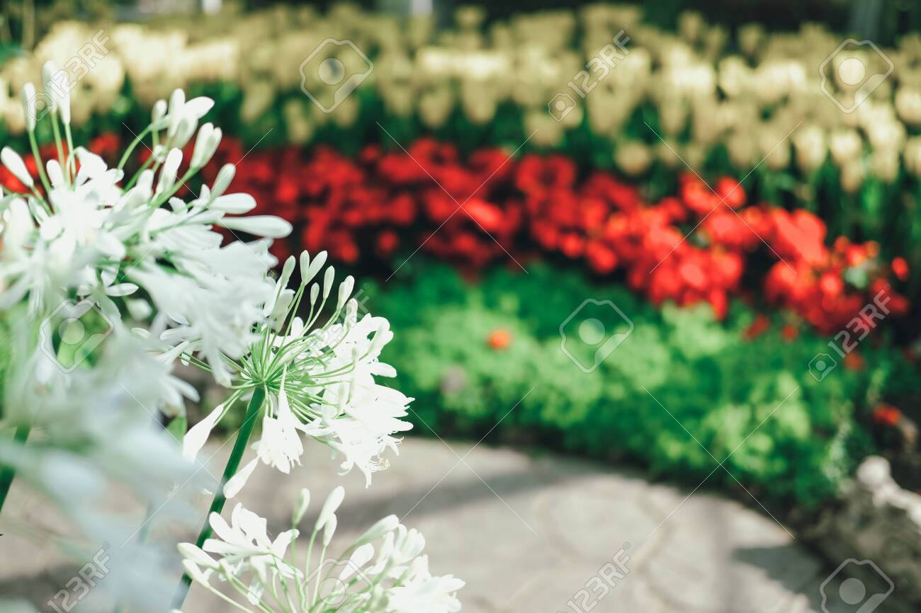 blooming flower plant in botany garden park - 136326406