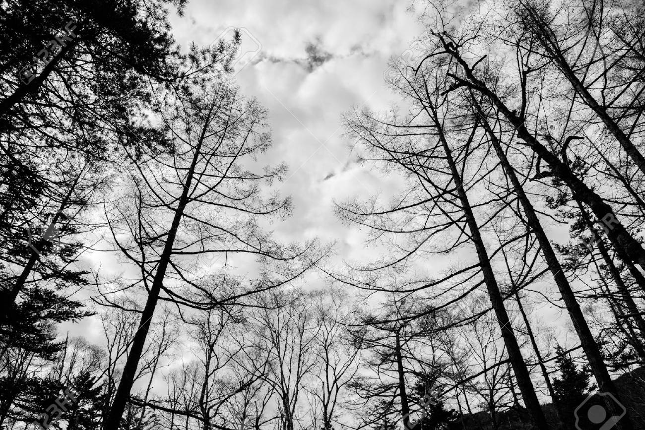 Black and white photo silhouette of leafless tree in autumn