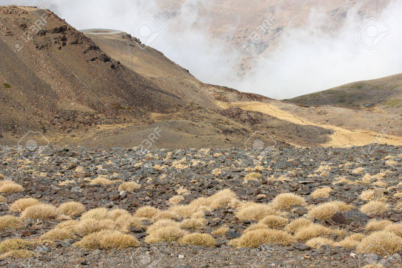 dry grass growing on volcanic ash Stock Photo - 16275770
