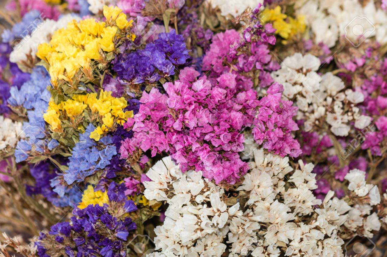 Image result for dried limonium