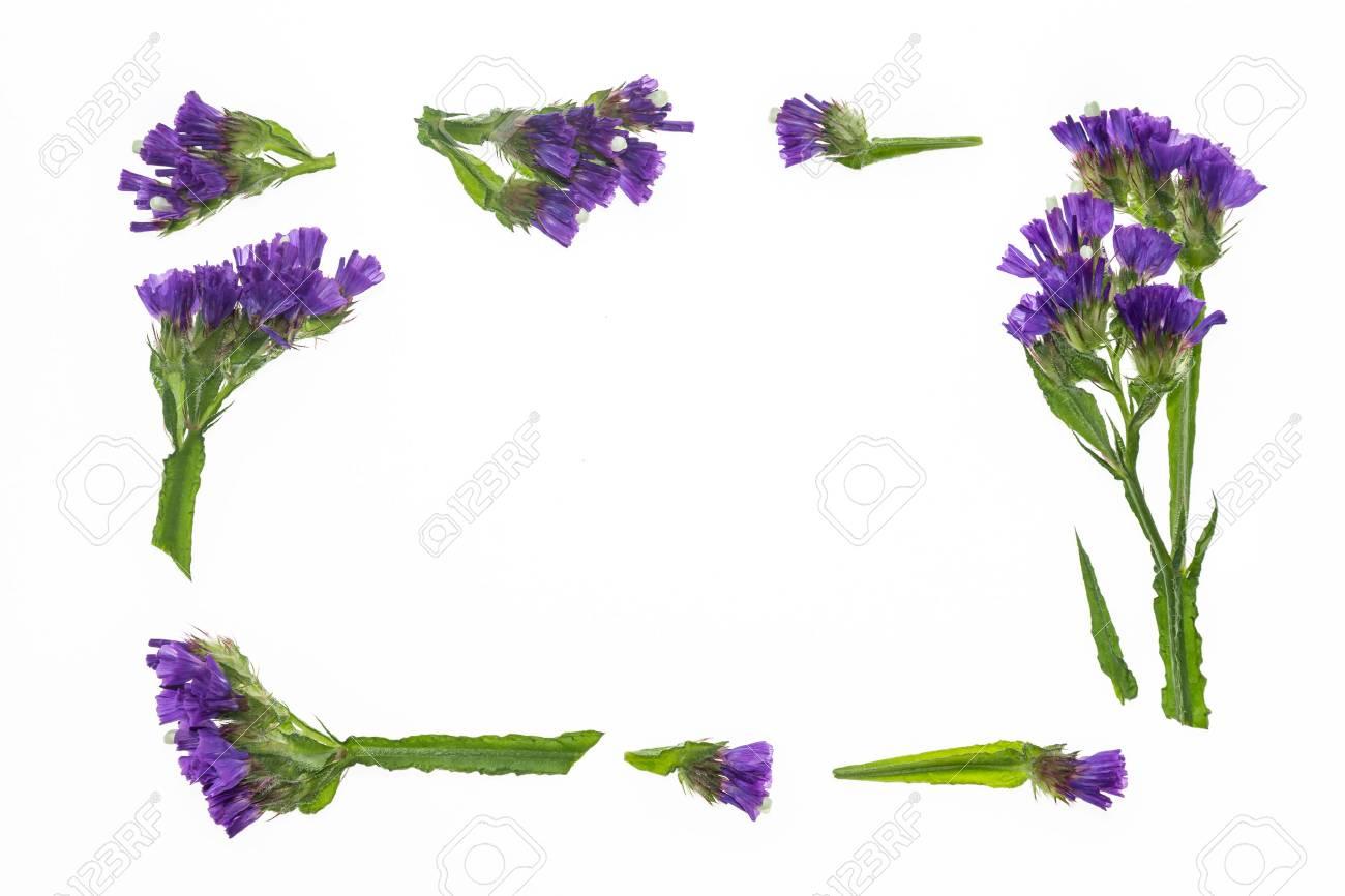 Purple statice flowers border frame on white background stock photo purple statice flowers border frame on white background stock photo 76997025 mightylinksfo