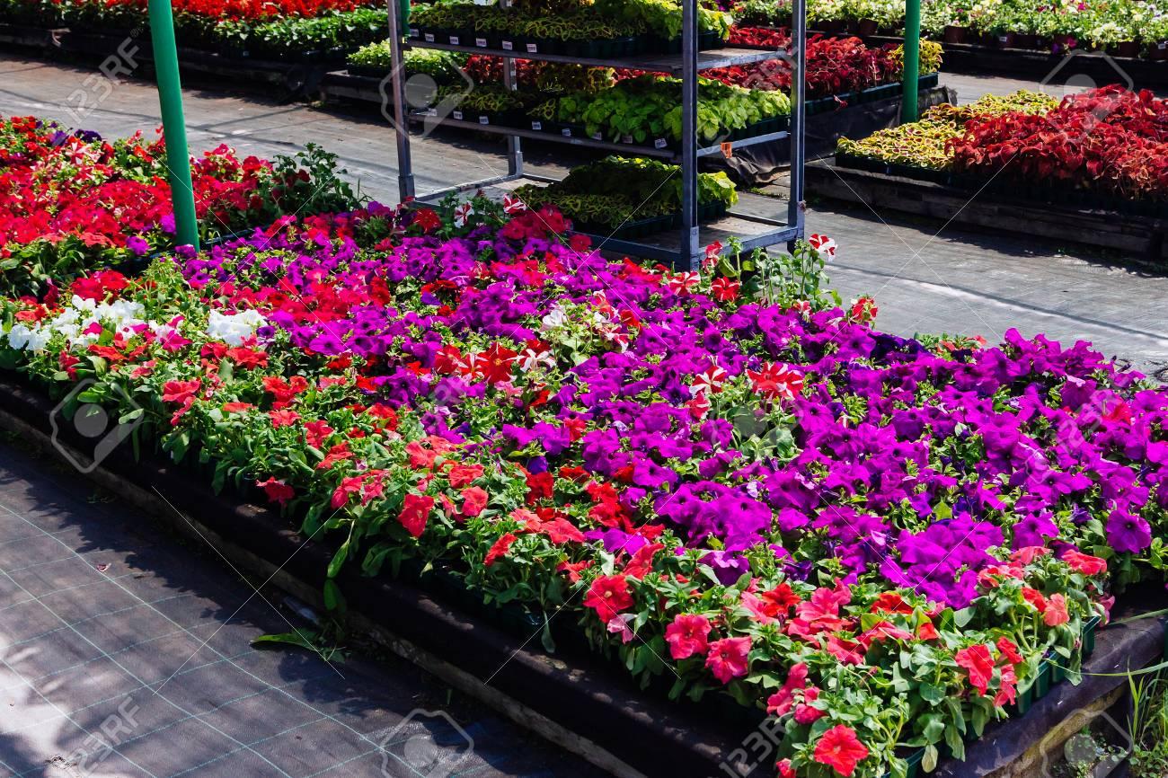 ornamental flowers on sale in plants nursery
