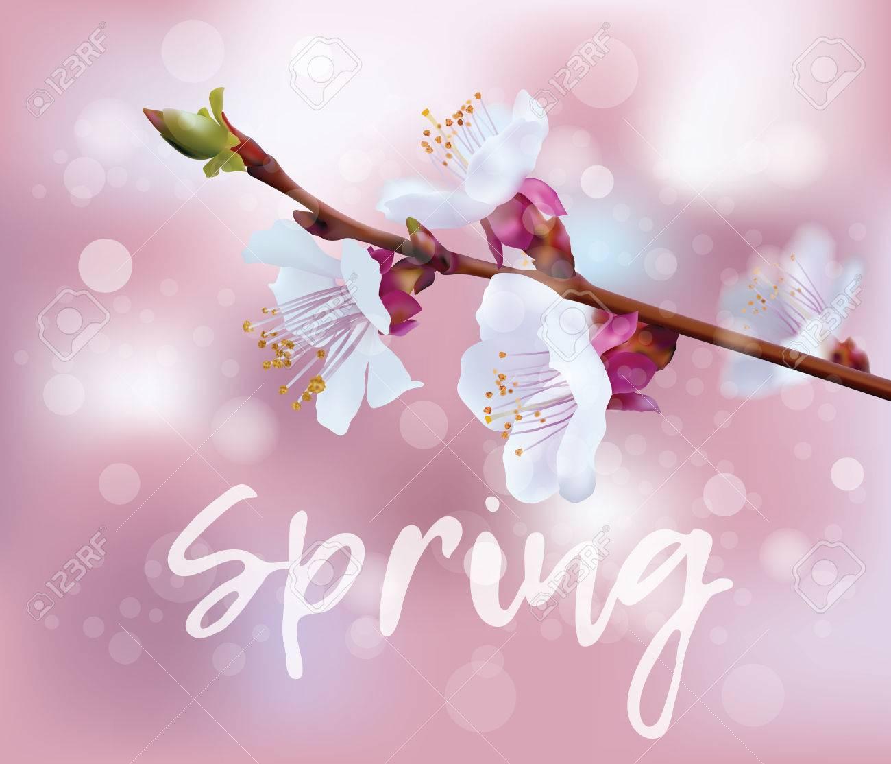 Floraison Vecteur De Branche Avec La Floraison De Printemps Branche