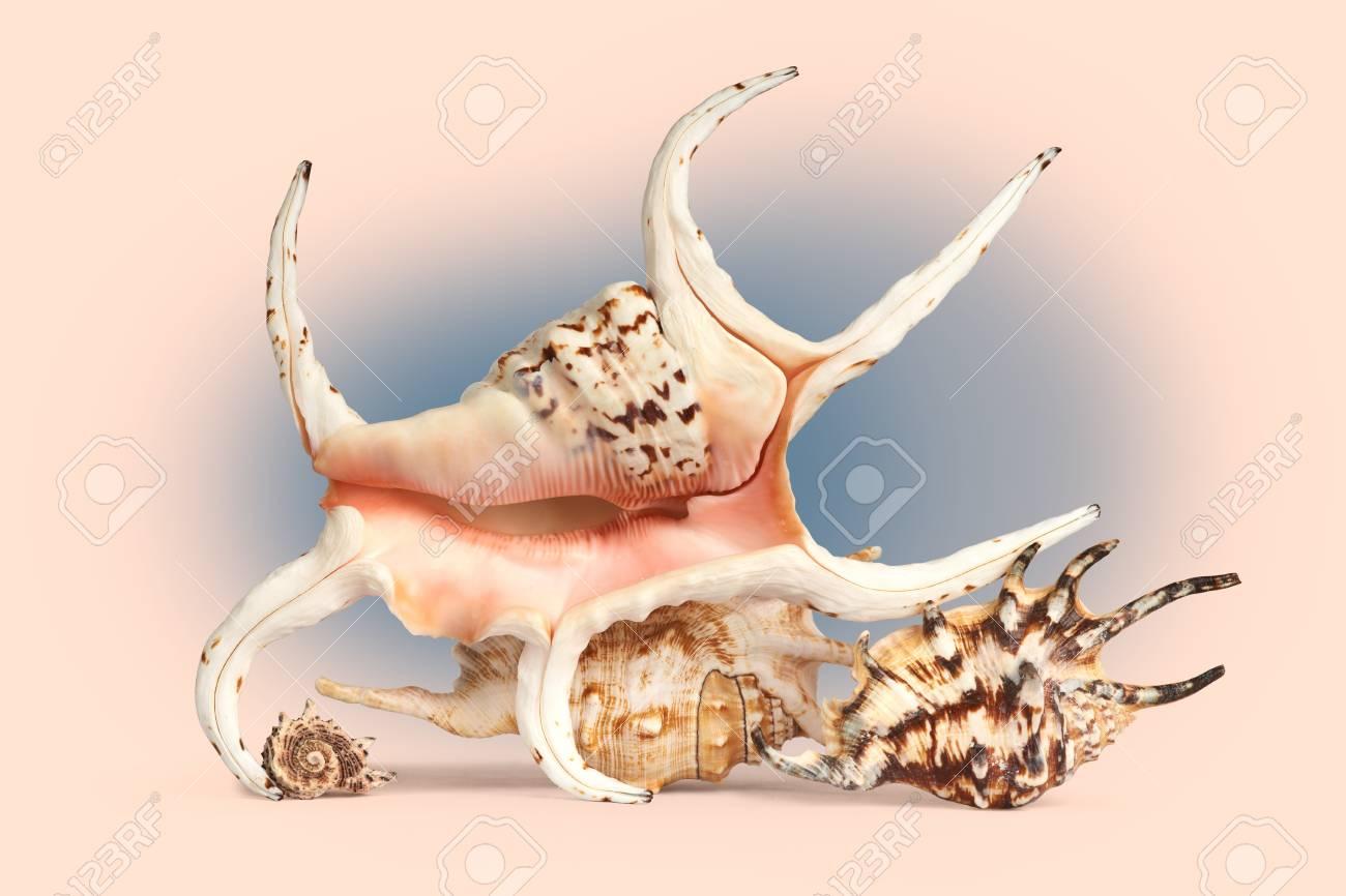 Sea shells in retro style Stock Photo - 14126191
