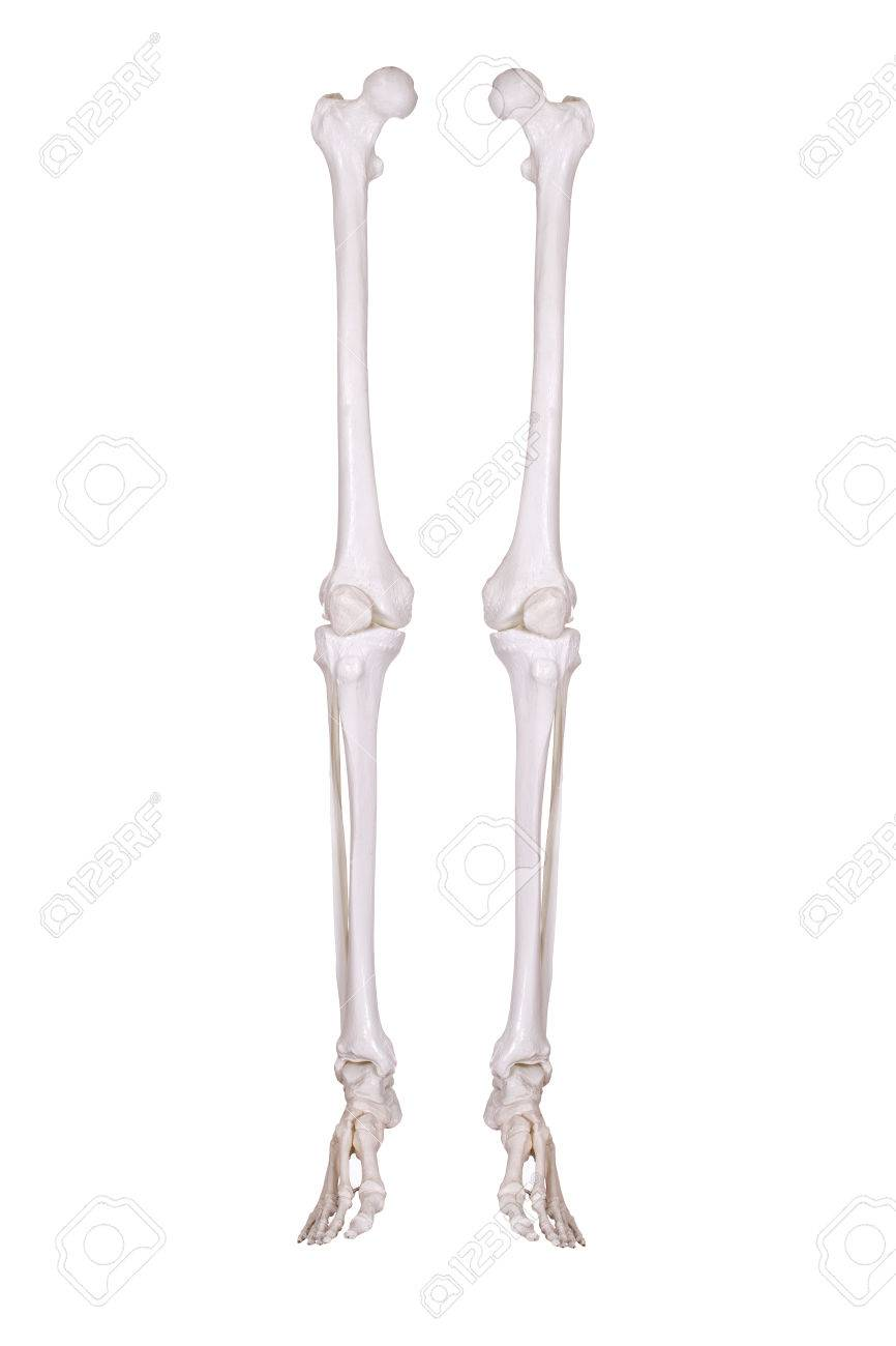 Detail Of Two Skeleton Legs Stock Photo Picture And Royalty Free