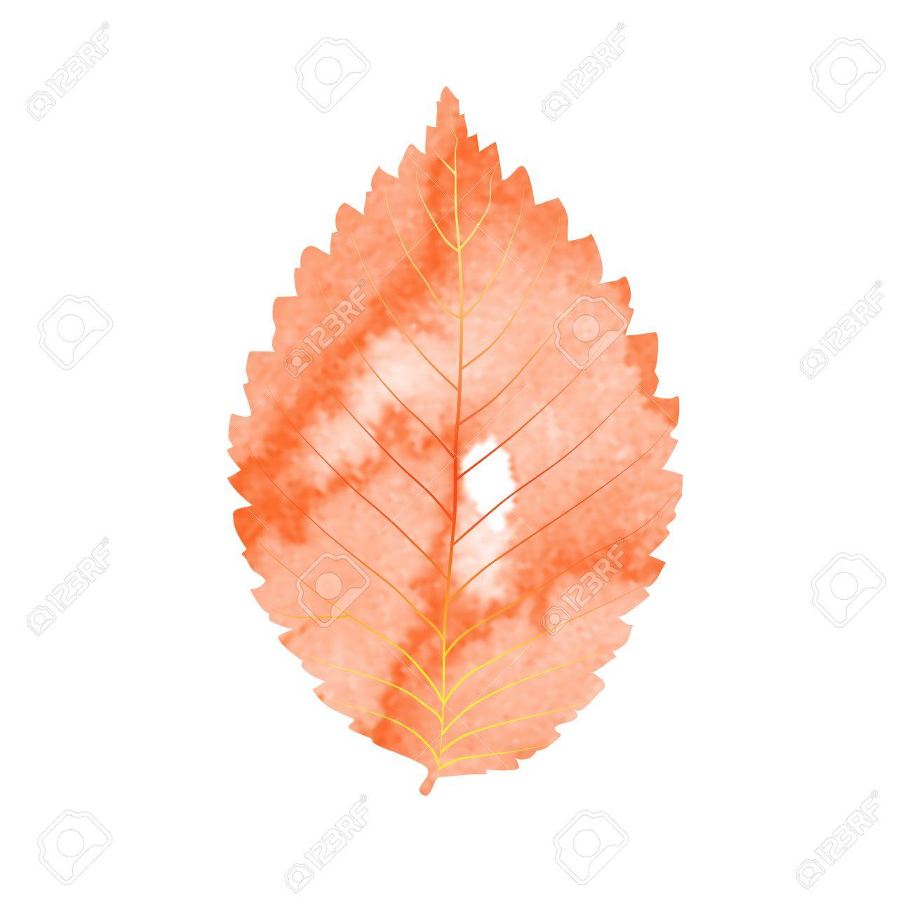 Aquarell Herbstblatt Vektor Gelbe Blatter Im Herbst Auf Weissem