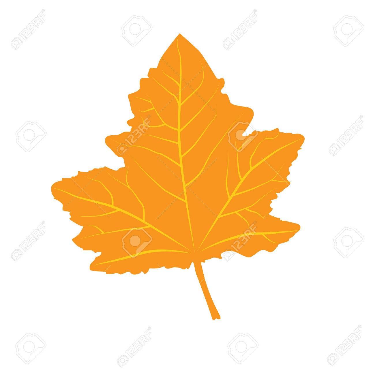 Bunte Herbstblatt Gelbe Blatter Im Herbst Auf Weissem Hintergrund