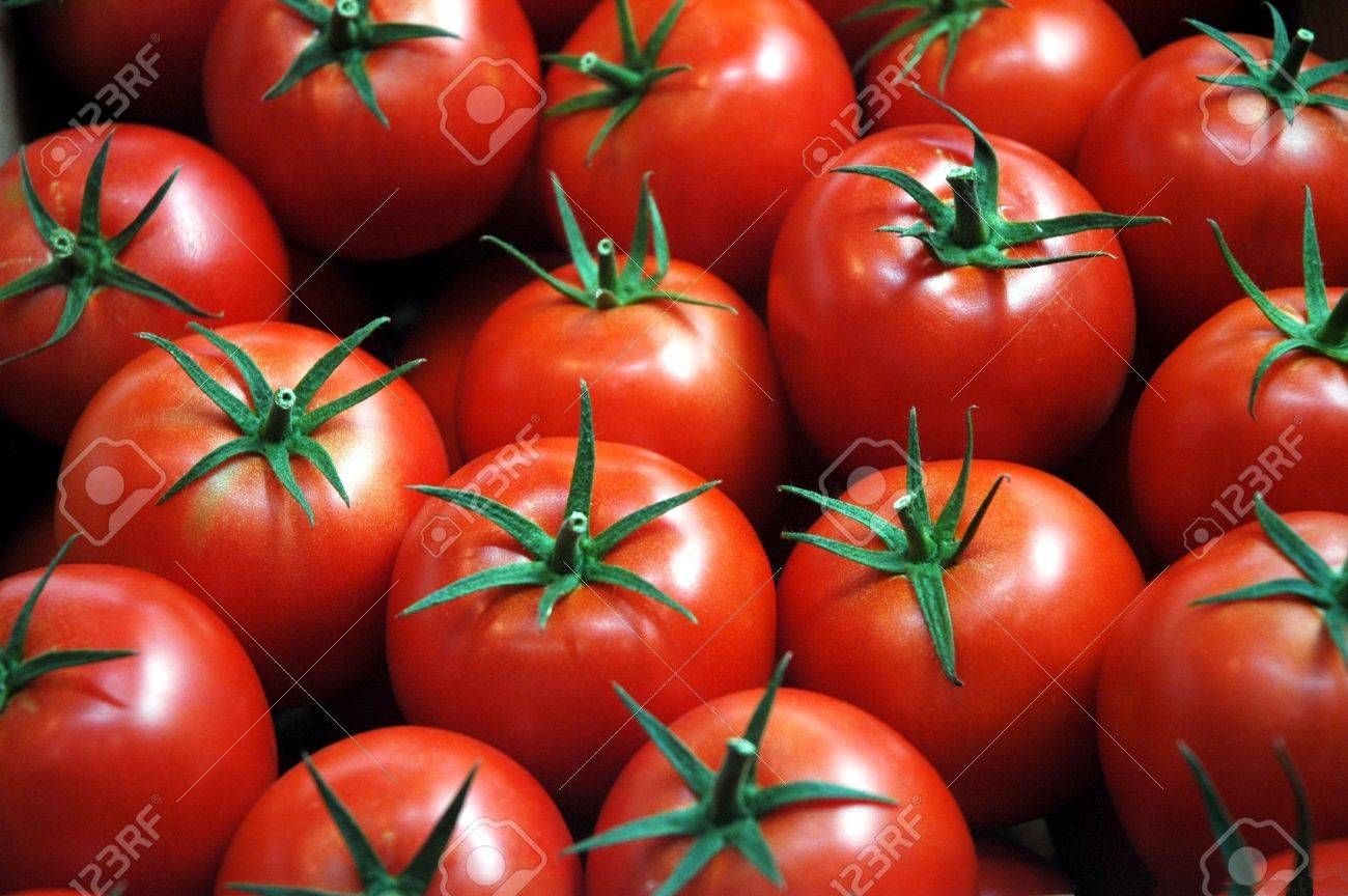 fresh tomatoes Stock Photo - 10880430