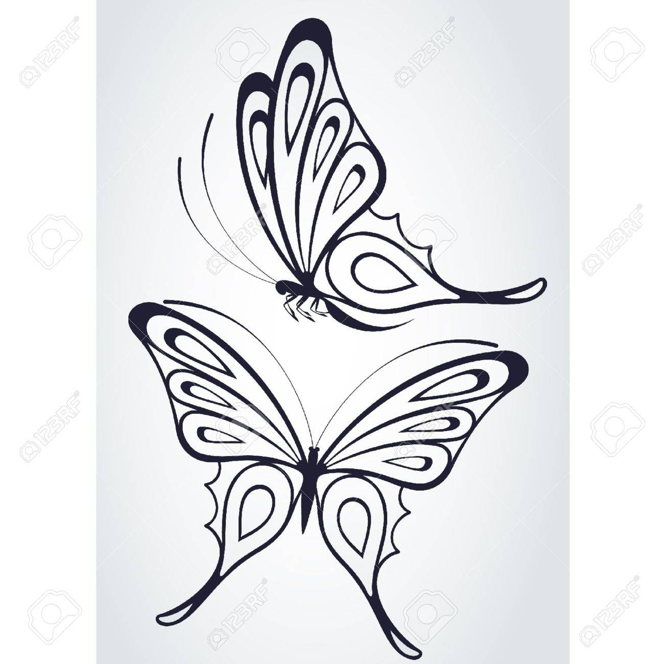 Tropical butterfly on a white background. Stock Vector - 9655199