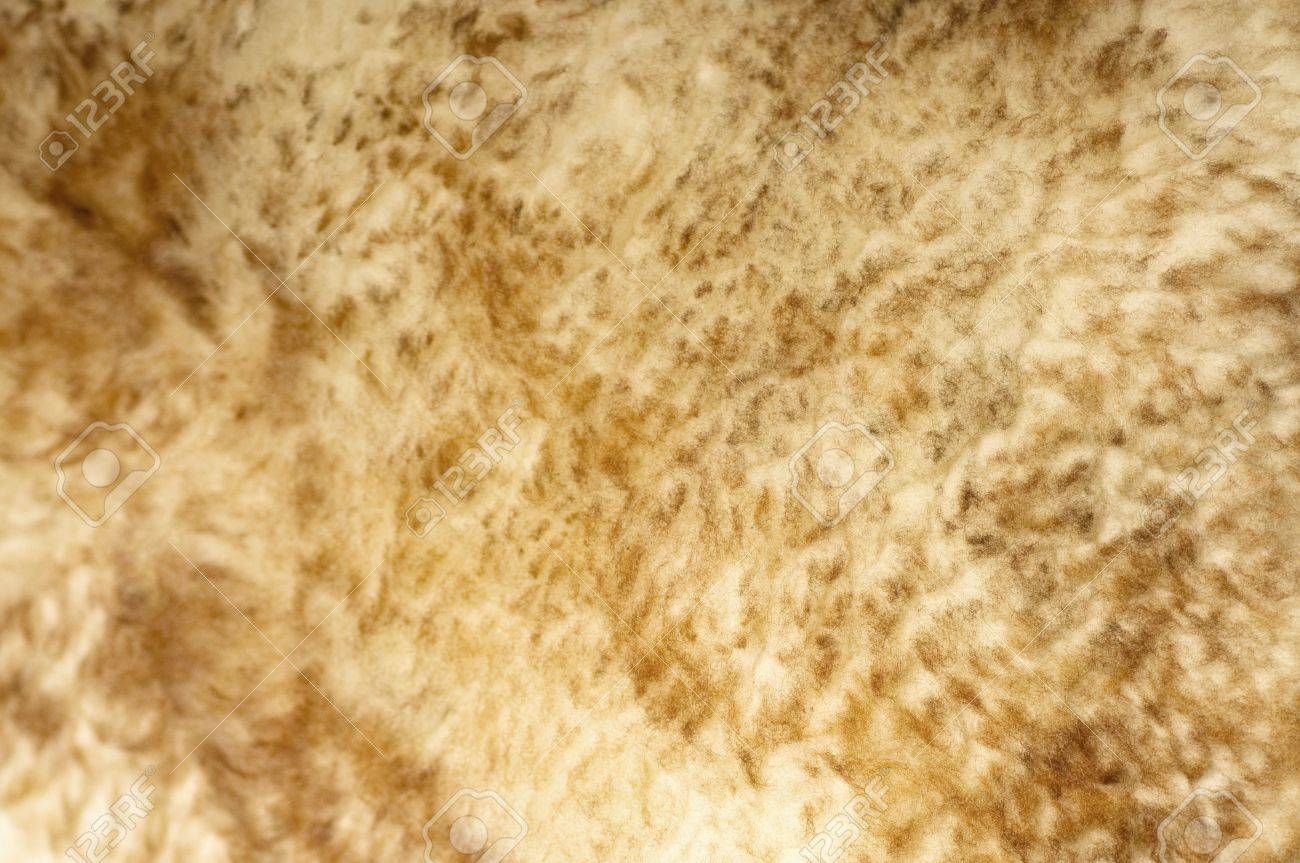 Sheep fur background texture Stock Photo - 20135204