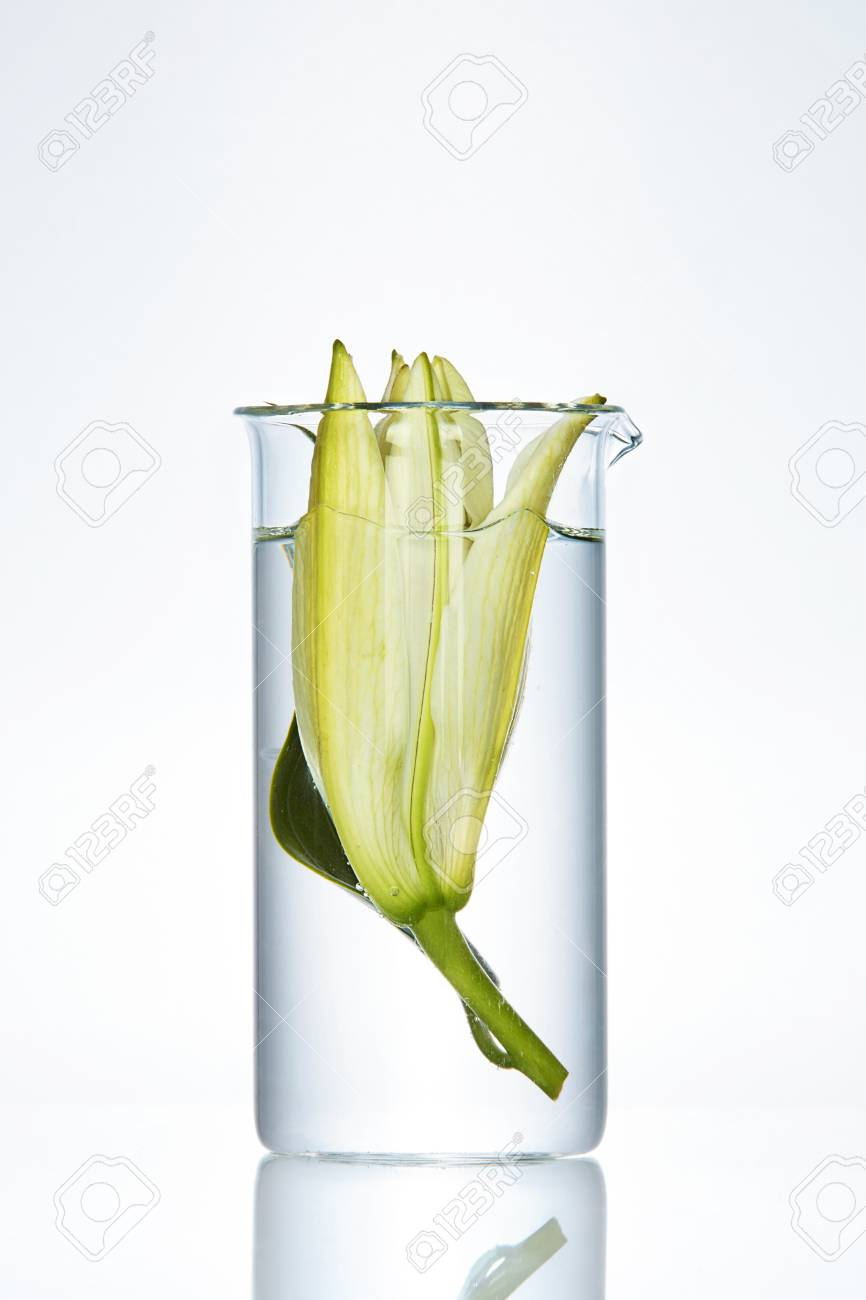 123RF.com & Flower With Liquid In Laboratory Transparent Glass On White Background...