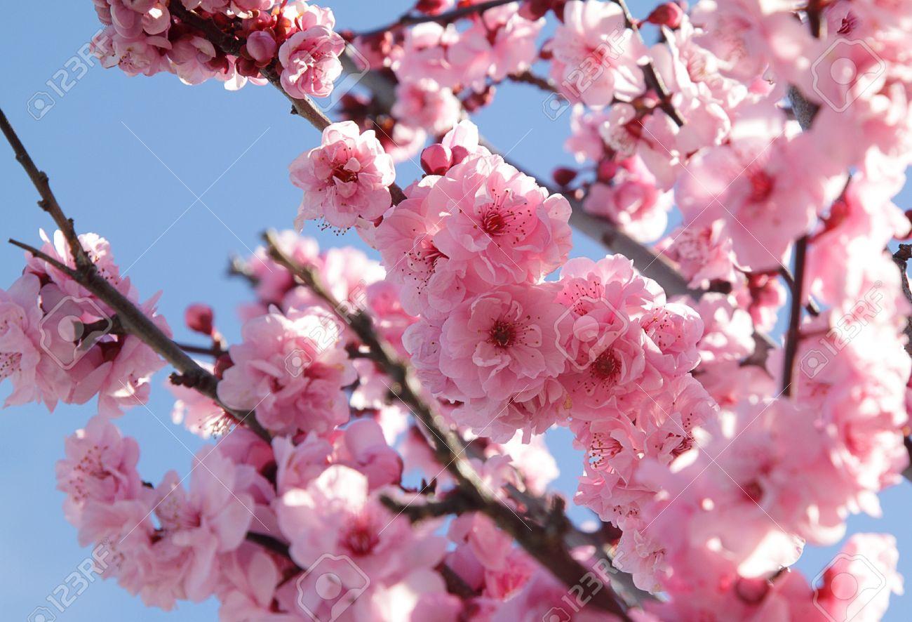 Ramos C Flores Rosas Rojas Artificiales27 Flores Ramo