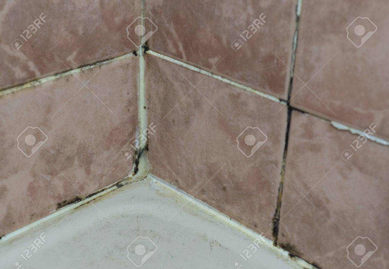 Black Mold Growing On Shower Grouted Joints Tile In Bathroom Wall Corner  Stock Photo   62967719
