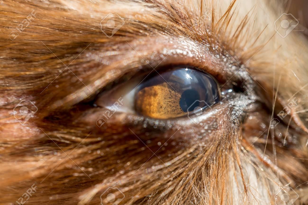 Doggie close-up