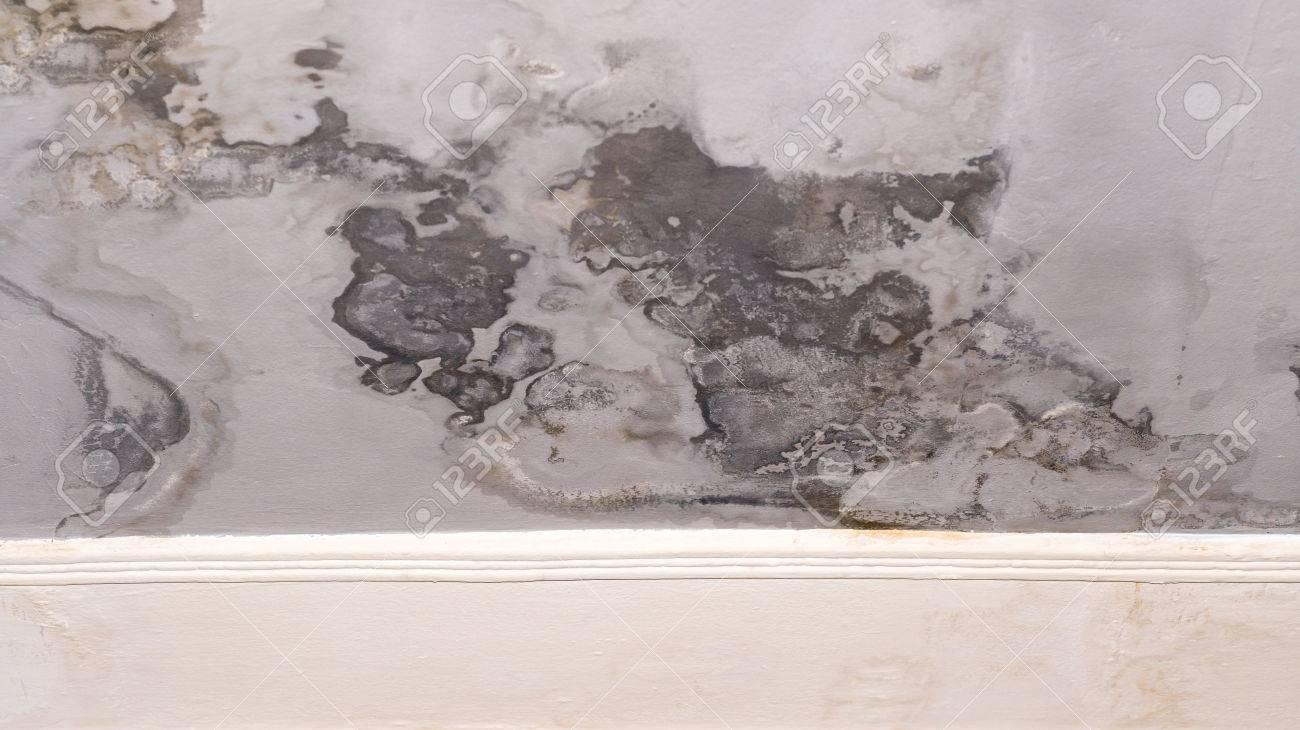 La Peinture Murale Qui Se Décolle Et S évanouit En Raison De Problèmes D Humidité Dans Le Revêtement Mural Les Tâches Sombres Doivent être Réparées