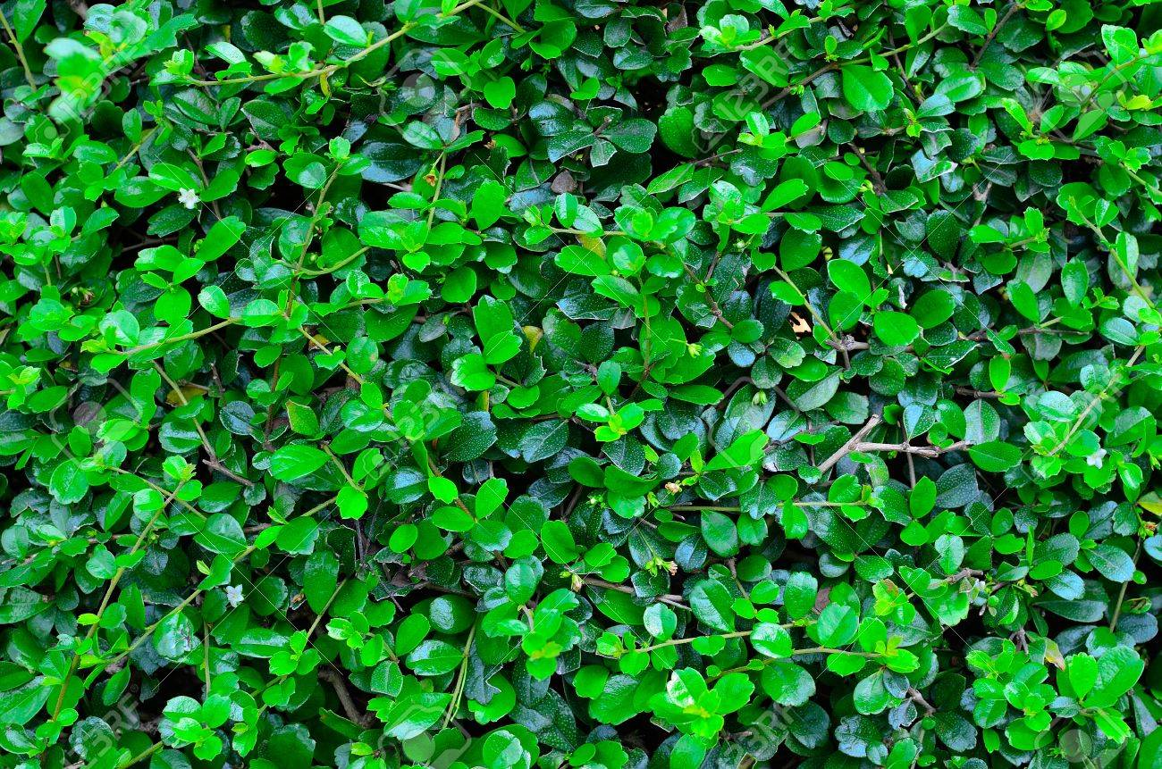 a texture of green plant Stock Photo - 12516664