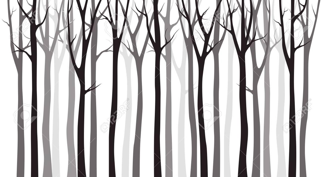 Birch tree wood silhouette on white background - 118967902