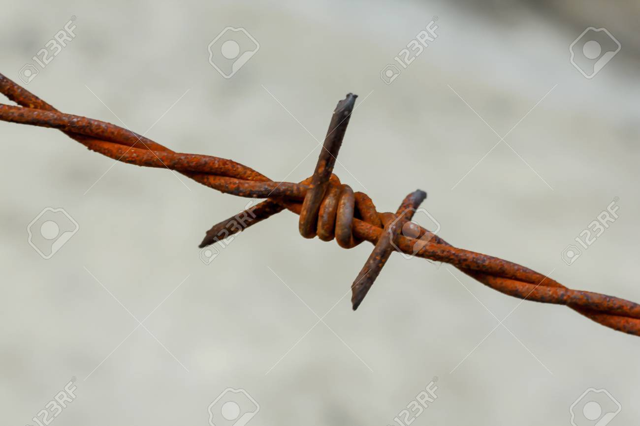 Old Barbed Wire At The Rusted Fence Stock Photo, Picture And Royalty ...