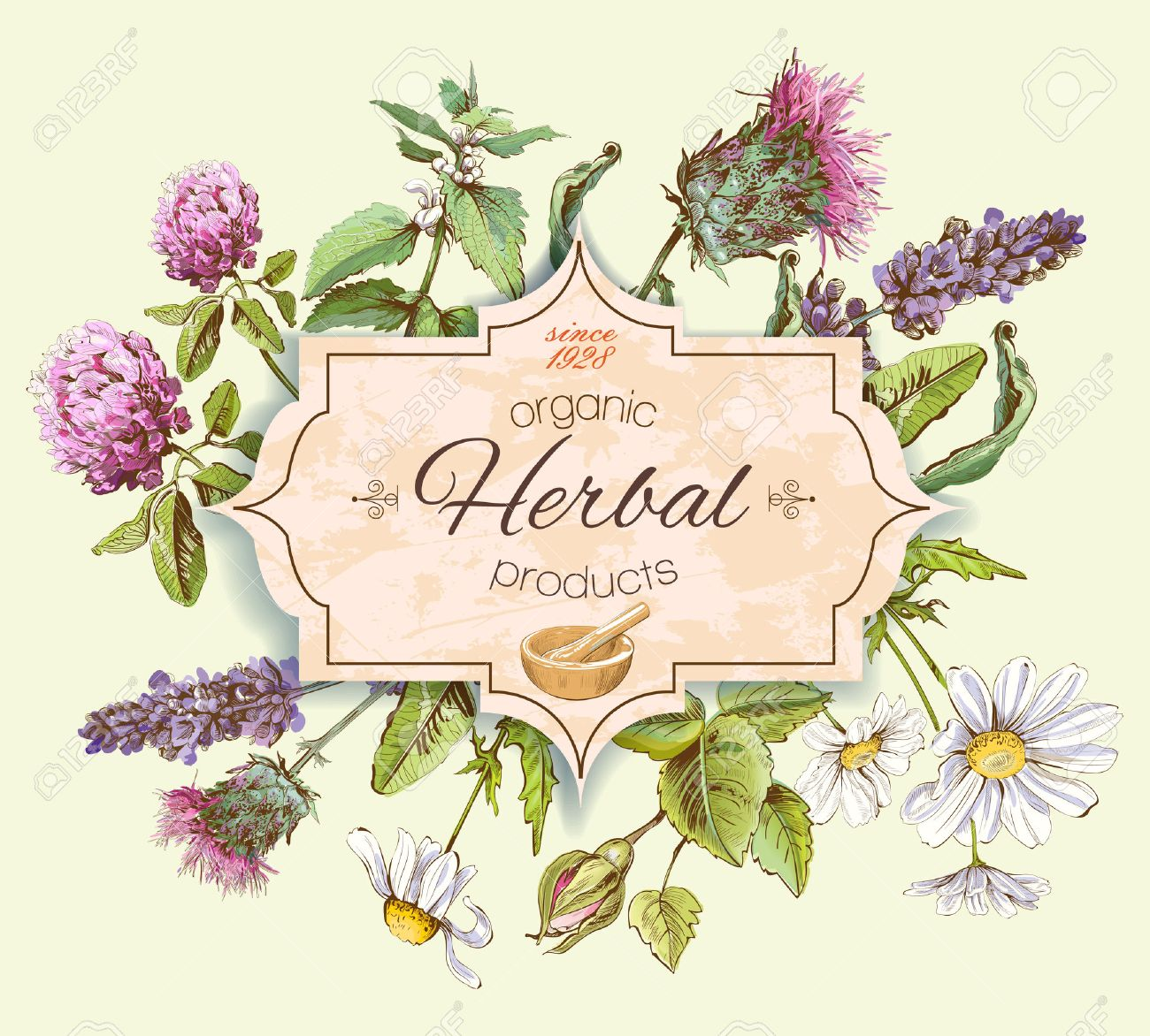 Vector vintage banner with wild flowers and medicinal herbs. Design for cosmetics, store, beauty salon, natural and organic, health care products. - 57796366
