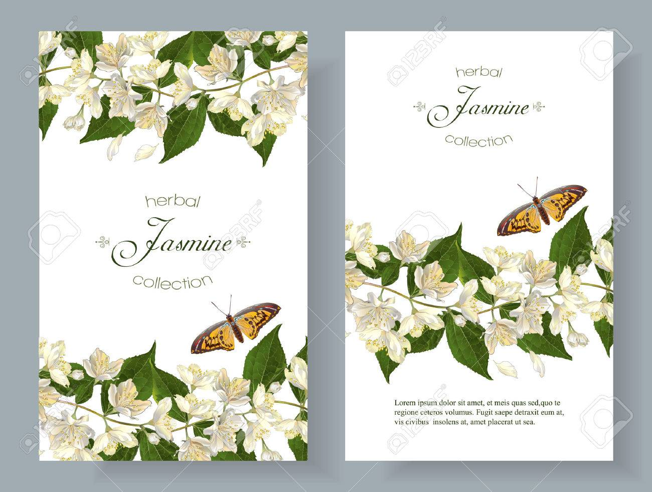 Vector jasmine flower banners. Design for tea, natural cosmetics, beauty store, organic health care products, perfume, essential oil, homeopathy, aromatherapy. With place for text. On white background - 66322849