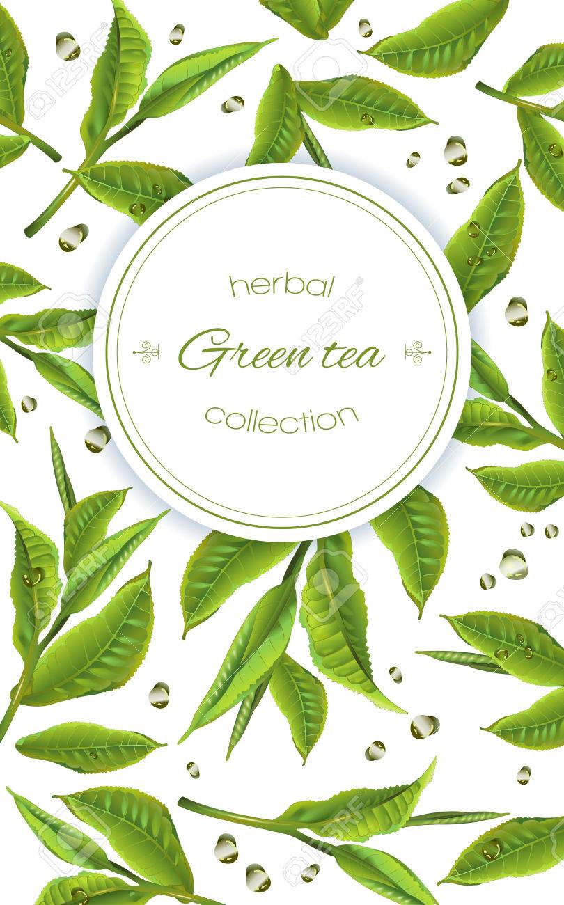 green tea with tea leaves and drops on white. Background design for packaging, tea shop, drink menu, homeopathy and health care products. - 68049281