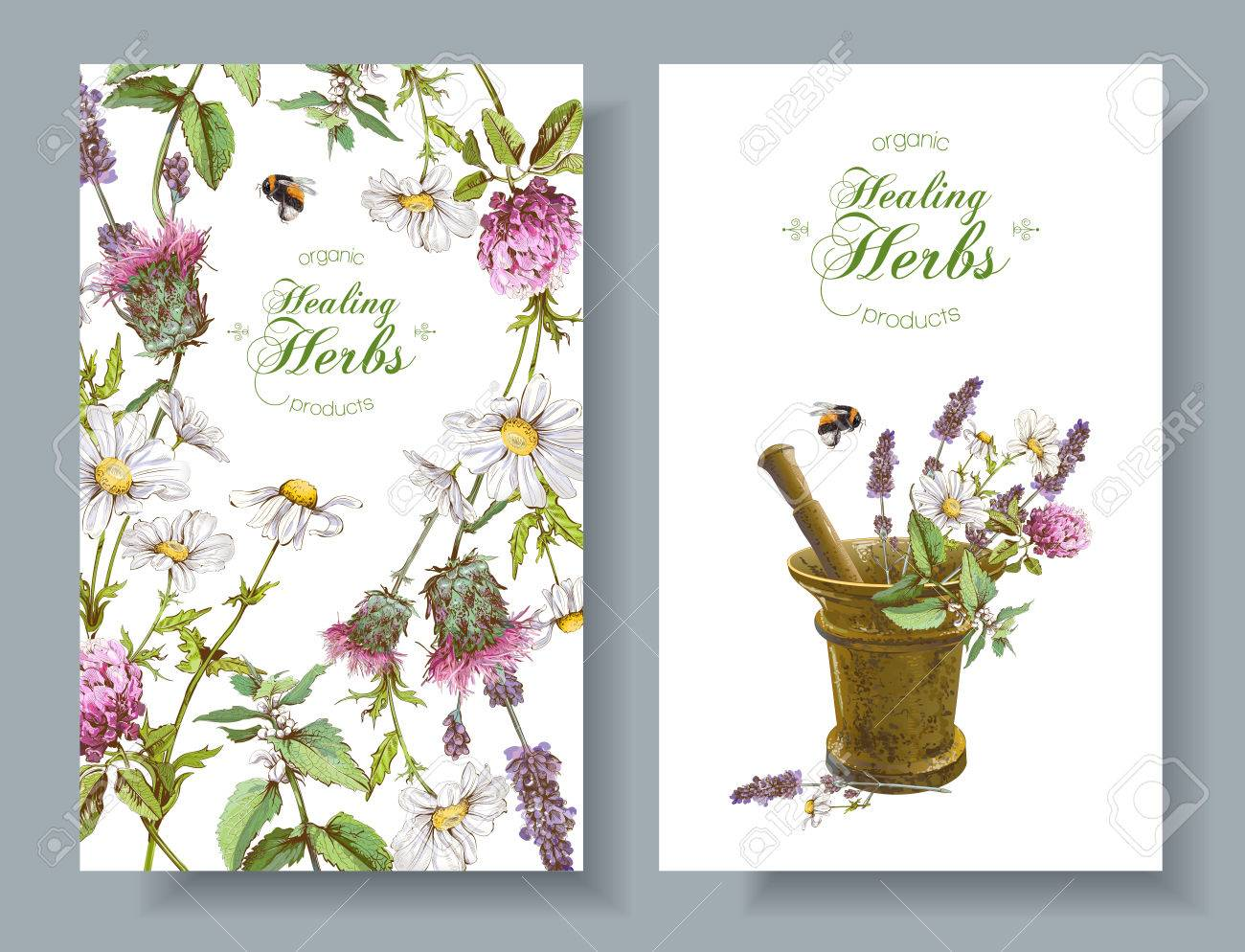 Vector Herbal Banners Royalty Free Cliparts Vectors And Stock Illustration Image 71027662