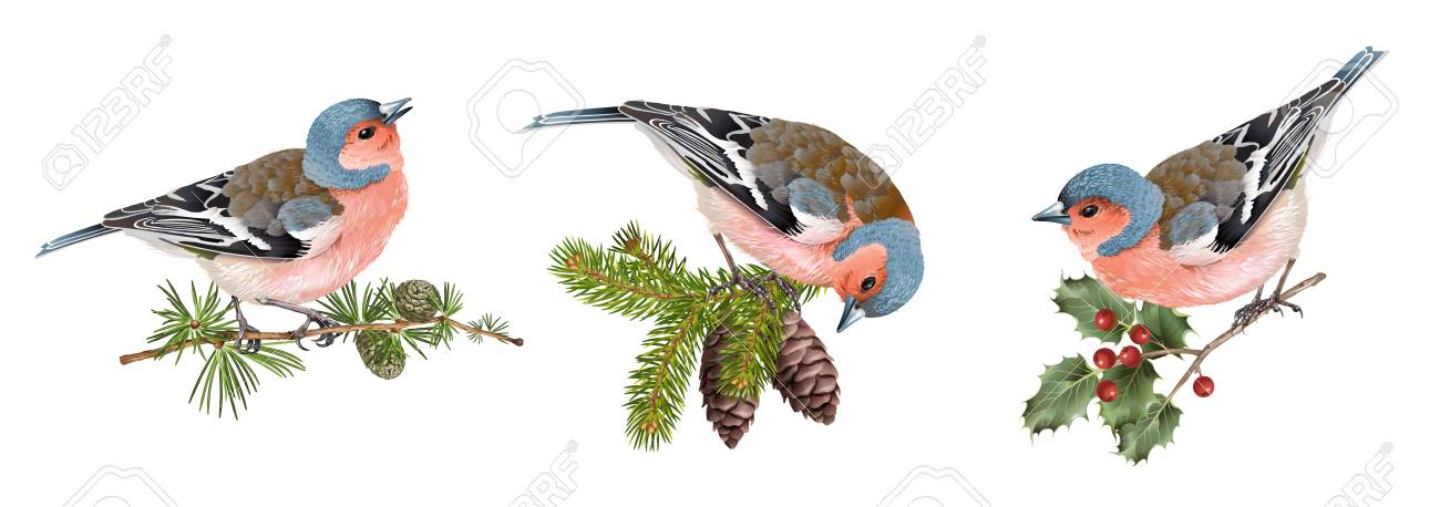 Finch birds set - 88597970