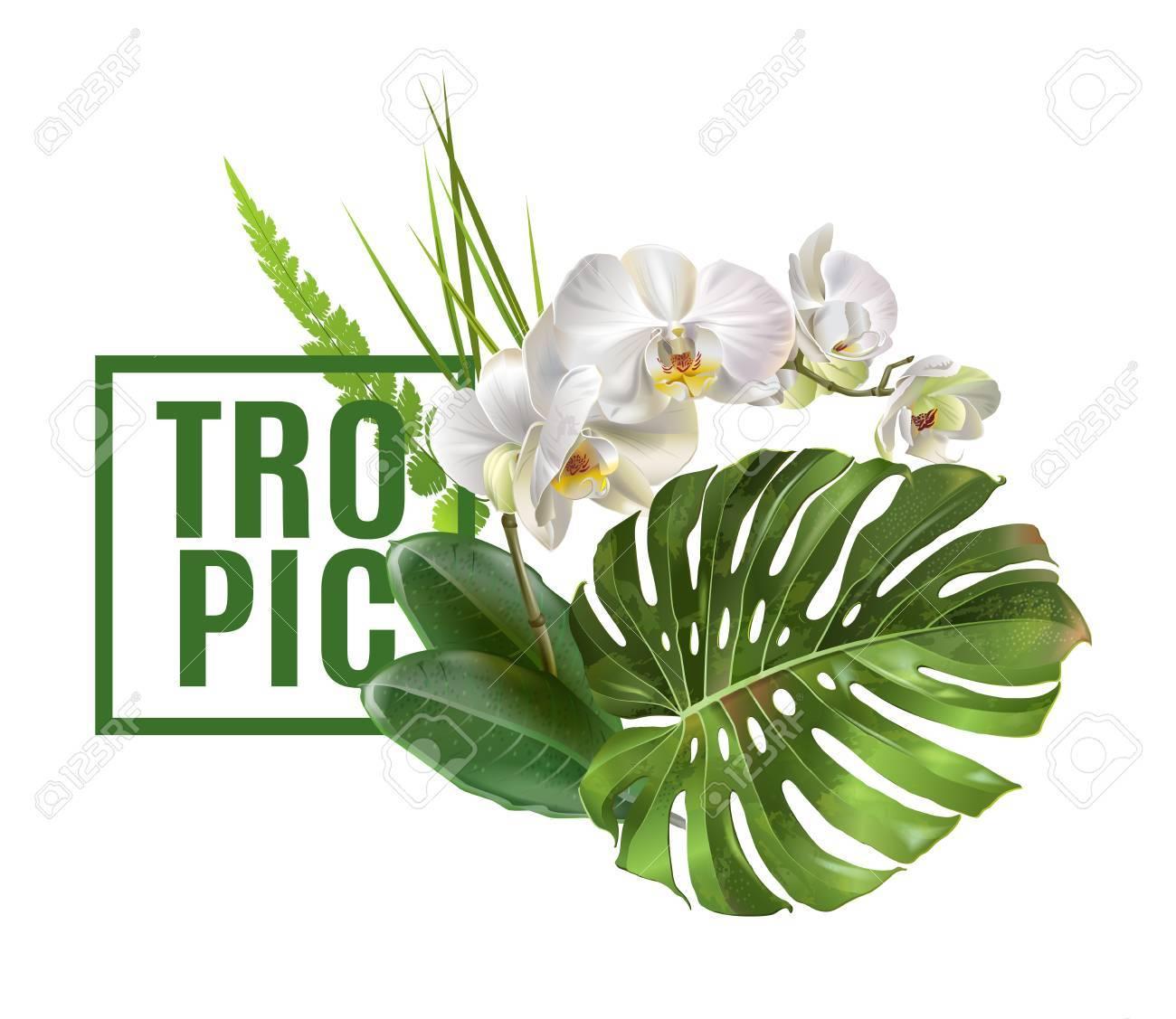 Tropic plants banner - 90041685
