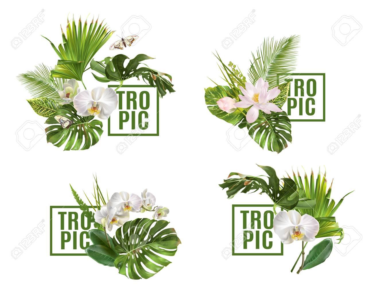 Tropic plants banner set - 90882057