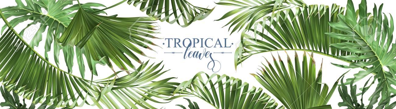 Tropical leaves web banner - 101117710