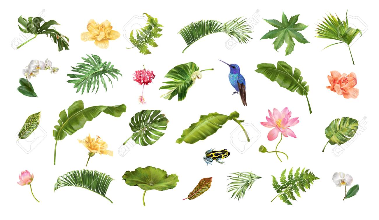 Vector realistic illustration set of tropical leaves and flowers isolated on white background. Highly detailed colorful plant collection. Botanical elements for cosmetics, spa, beauty care products - 127672807