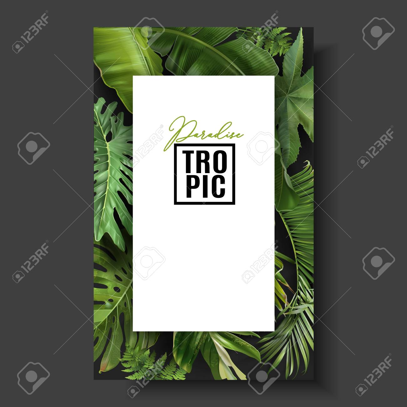 Vector Banner With Green Tropical Leaves On Black Background Royalty Free Cliparts Vectors And Stock Illustration Image 126505324